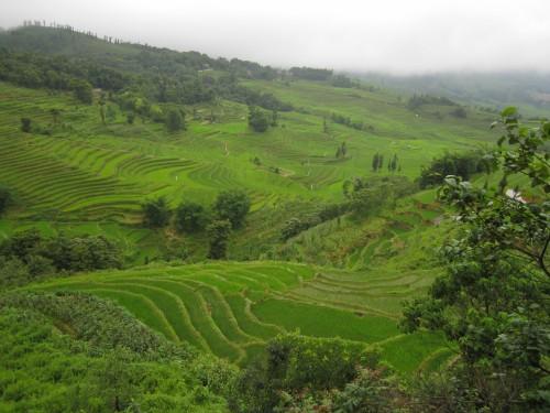las terrazas de Yuanyang donde se planta arroz a diferentes alturas